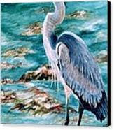 On The Rocks Great Blue Heron Canvas Print by Roxanne Tobaison
