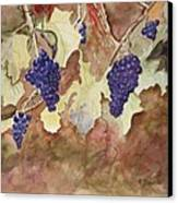 On The Vine Canvas Print by Patricia Novack