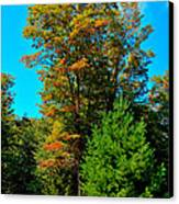 On Top Of Maple Ridge - Old Forge New York Canvas Print by David Patterson
