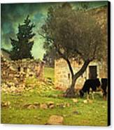 Once Upon A Time In Phokaia  Canvas Print