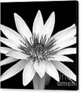 One Black And White Water Lily Canvas Print