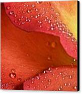 One In Ten Thousand  Canvas Print