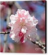 One Pink Blossom Canvas Print by Carol Groenen