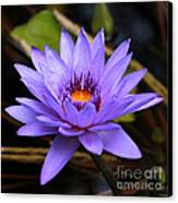 One Purple Water Lily Canvas Print by Carol Groenen