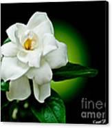 One Sensual White Flower Canvas Print by Carol F Austin