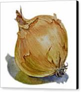 Onion Canvas Print