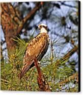 Opulent Osprey Canvas Print by Al Powell Photography USA