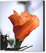 Orange Hibiscus Lax 2 Canvas Print by Deborah Smolinske
