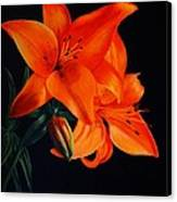 Orange Lilly Canvas Print by David Hawkes