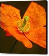 Orange Paper Poppy Canvas Print