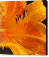 Orange Rain Canvas Print
