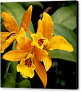 Orange Spotted Lip Cattleya Orchid Canvas Print