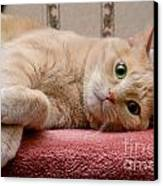 Orange Tabby Cat Lying Down Canvas Print by Amy Cicconi