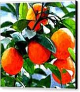 Orange Tree In Springtime  Canvas Print