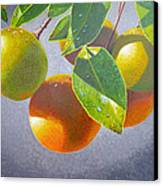 Oranges Canvas Print by Carey Chen