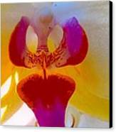 Orchid Blast Canvas Print by Robert Bray