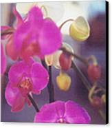 Orchid Delight Canvas Print by Robert Bray