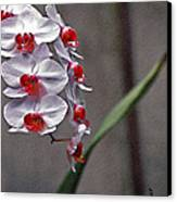 Orchid In Window Canvas Print