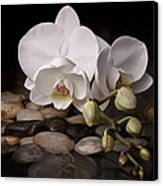 Orchid - Sensuous Virtue Canvas Print by Tom Mc Nemar