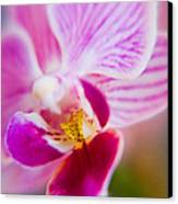 Orchide Detail 2 Canvas Print by Kim Lagerhem