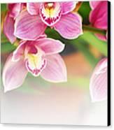 Orchids Canvas Print by Carlos Caetano