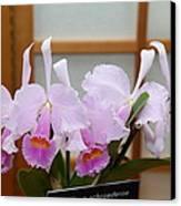 Orchids - Us Botanic Garden - 011315 Canvas Print by DC Photographer