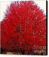 Oregon Red Maple Beauty Canvas Print by Kim Petitt