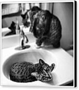 Oskar And Klaus At The Sink Canvas Print by Mick Szydlowski