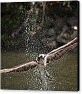 Osprey Fishing The Nequasset River Canvas Print by Allen Ponziani