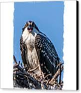 Osprey Surprise Party Card Canvas Print