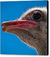 Ostrich Profile Canvas Print