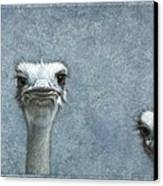 Ostriches Canvas Print by James W Johnson