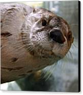 Otter Be Lookin' At You Kid Canvas Print by John Haldane