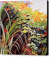Pacific Crocosmia Canvas Print