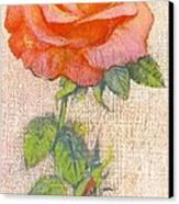 Pale Rose Canvas Print by George Adamson