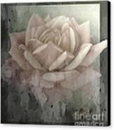 Pale Rose Photoart Canvas Print by Debbie Portwood