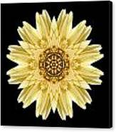 Pale Yellow Gerbera Daisy I Flower Mandala Canvas Print by David J Bookbinder