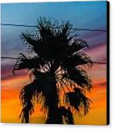 Palm In The Sunset Canvas Print by Jason Brow
