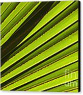 Palm Lines Canvas Print