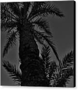 Palm Reader Canvas Print by Tara Miller