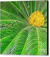 Palm Tree With Blossom Canvas Print