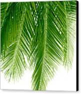 Palms Green Canvas Print