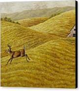 Palouse Farm Whitetail Deer Canvas Print by Crista Forest