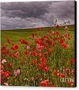 Palouse Poppies Canvas Print