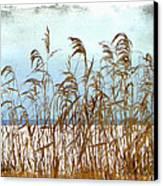 Pampas Grass Canvas Print by Dianne  Lacourciere
