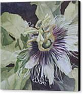 Panama Passion Canvas Print