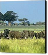 Panorama African Elephant Herd Endangered Species Tanzania Canvas Print