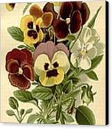 Pansies Canvas Print by Philip Ralley