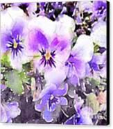 Pansies Watercolor Canvas Print