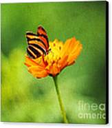 Papillon Canvas Print by Darren Fisher